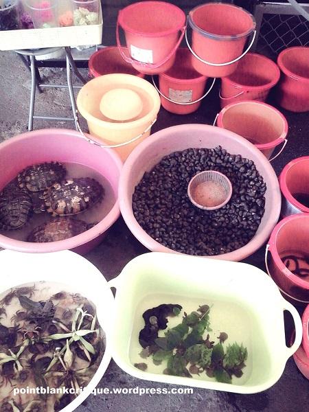 Thai Superstition A plethora of aquatic creatures for merit making