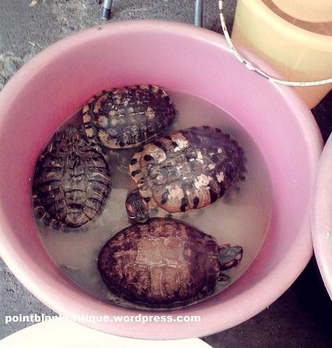 Tortoises signify longevity A Thai Ghostly legend