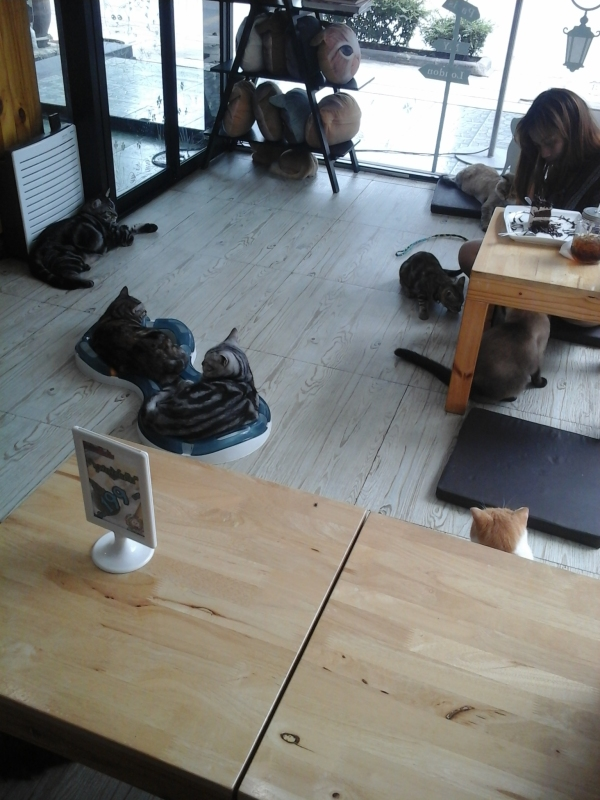 Bangkok Thailand Fat Cat Cafe