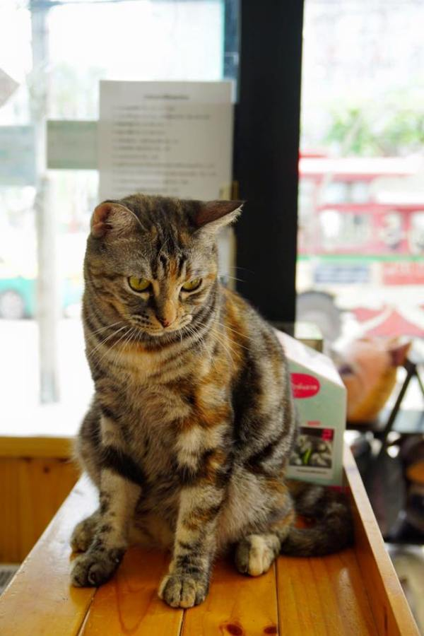 Fat Cat Cafe in Bangkok