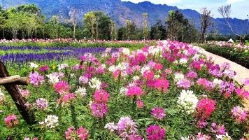 Blooming In Style at PB Valley Winery Khaoyai
