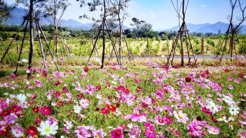 Blooming In Style at PB Valley Winery Khaoyai