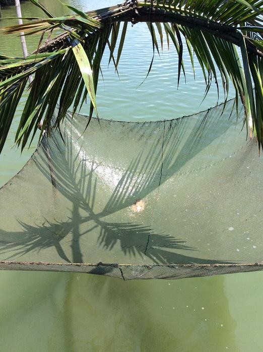The art of krill fishing in Prasae