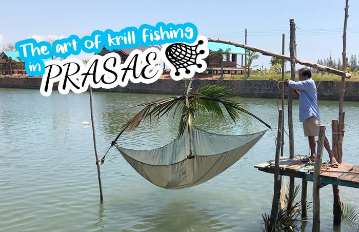 The art of krill fishing in Prasae