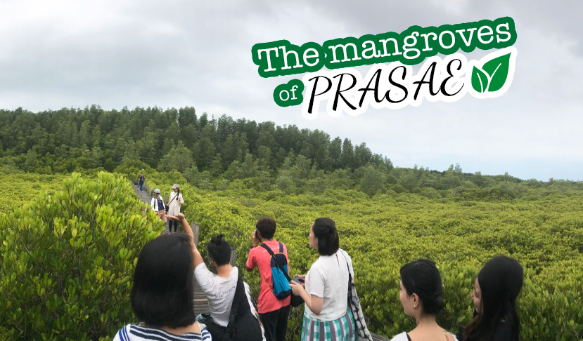 The mangrove of prasae