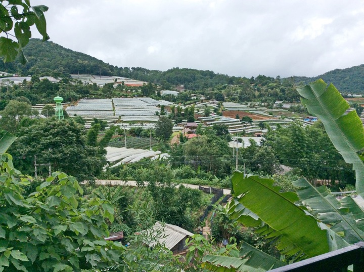 The aromatic trail of hill tribe coffee in Chiang Mai