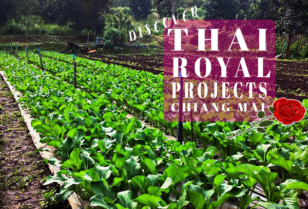 Discover the unique Thai Royal Projects Chiang Mai