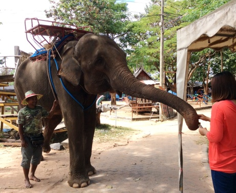 Discover the land of silk and elephants in Surin